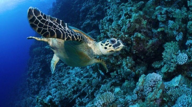 Дюжина лучших дайвинг‑спотов в Красном море
