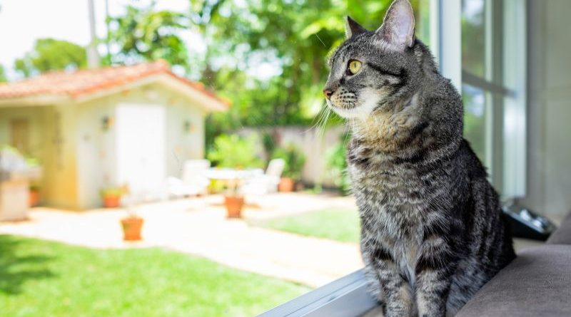 Оставляем кошку одну дома. Советы