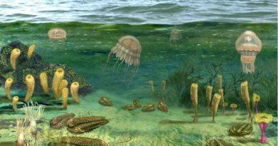 Ученые предполагают, что в «водных мирах» у жизни есть шанс