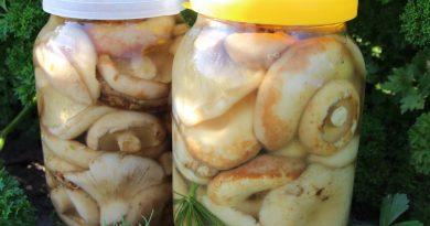 Засолка грибов - холодный способ.