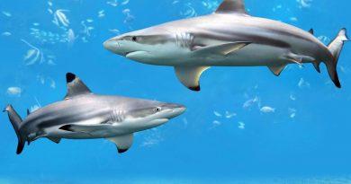 Сумасшедшие факты об акулах, которые вам могут быть интересны