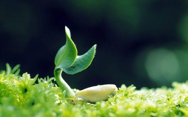 Представлены генетически модифицированные «умные» растения