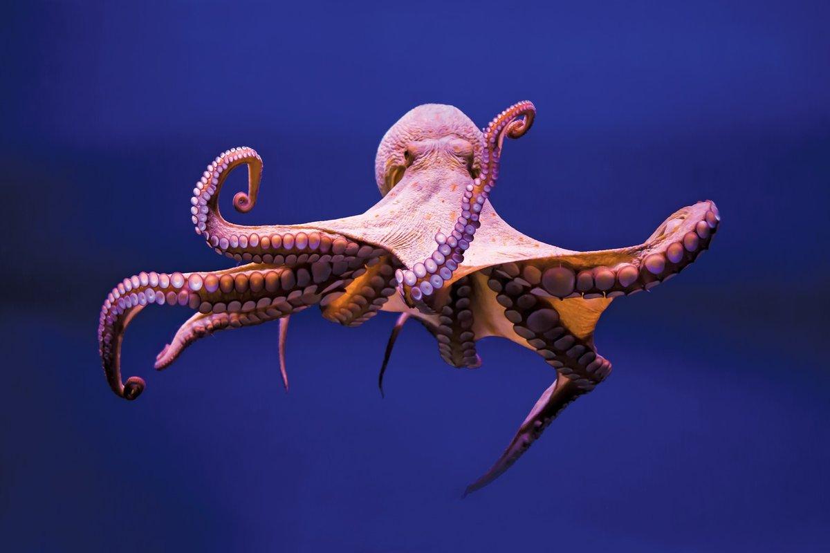 10 интересных фактов жизни морских обитателей