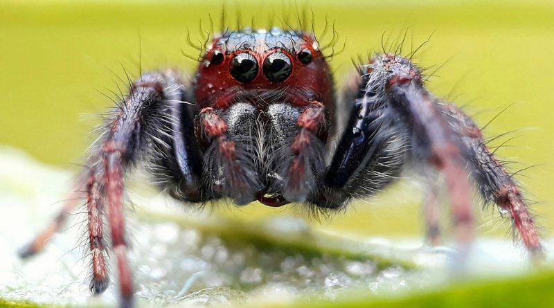 Где находится мозг у паука