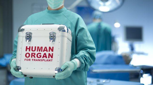 Впервые в истории пересажены искусственно выращенные легкие