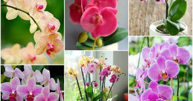 Почему не цветет орхидея и как можно это исправить