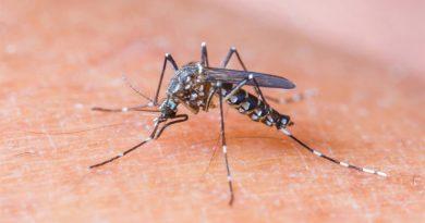 Отдых без комаров: полезные советы