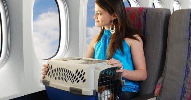 Путешествие с домашними питомцами: правила и советы