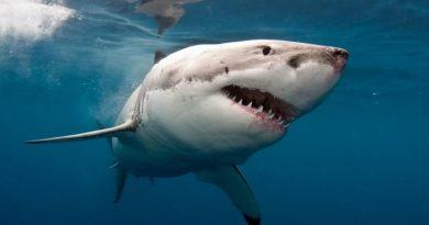 В Египте от нападения акулы погиб чешский турист