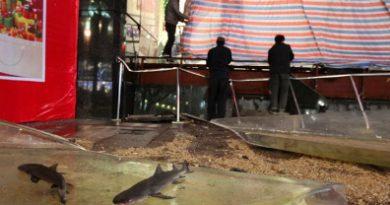 В Шанхае на посетителей рухнуло стекло аквариума с 34 тоннами воды