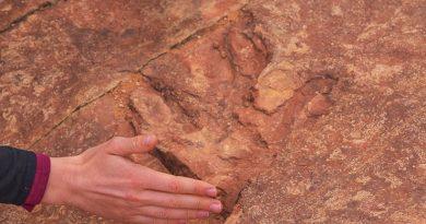 В национальном парке США туристы принимают за гальку окаменелости динозавров и выкидывают