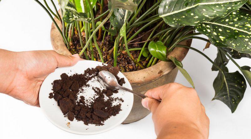 12 эффективных способов удобрить домашние растения