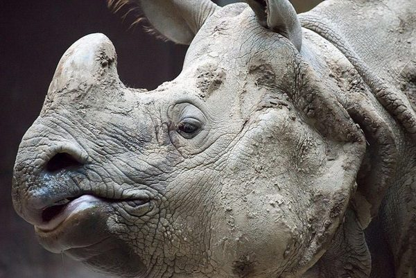 Топ 5 самых редких животных в мире
