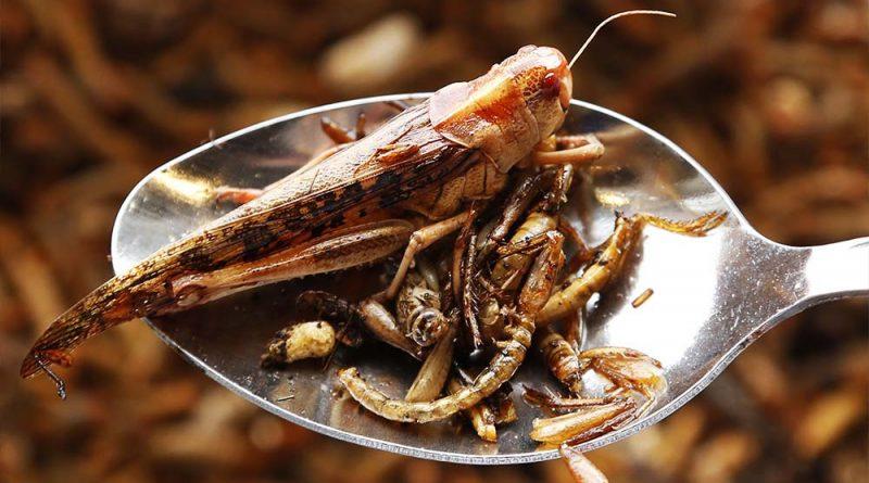 8 насекомых, которые заменят нам еду