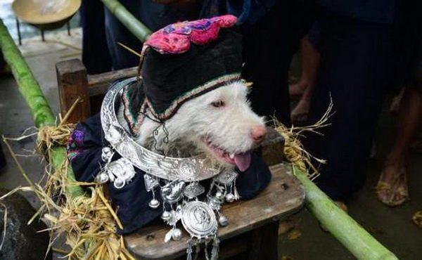Древнекитайский праздник ношения собак