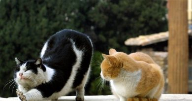Как живется котикам в Риме