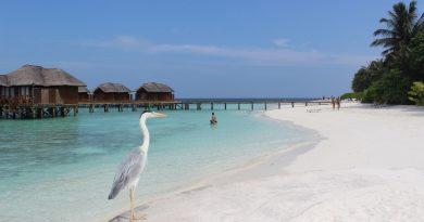 Что нужно сделать на Мальдивах?