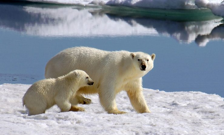 Какие животные обитают в Арктике?