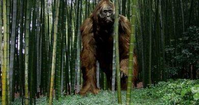 Почему вымерли 3-х метровые приматы?