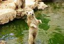 Пятерка лучших зоопарков мира