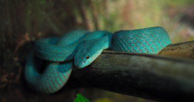 5 самых опасных змей с которыми могут столкнуться туристы в Таиланде