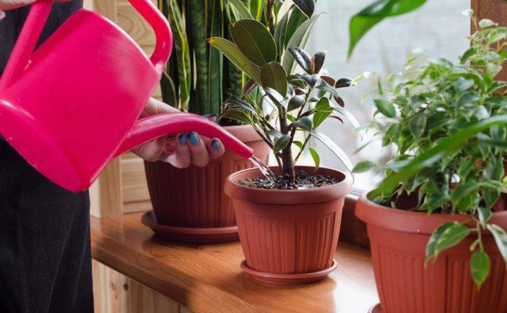 Одиннадцать способов удобрить домашние растения