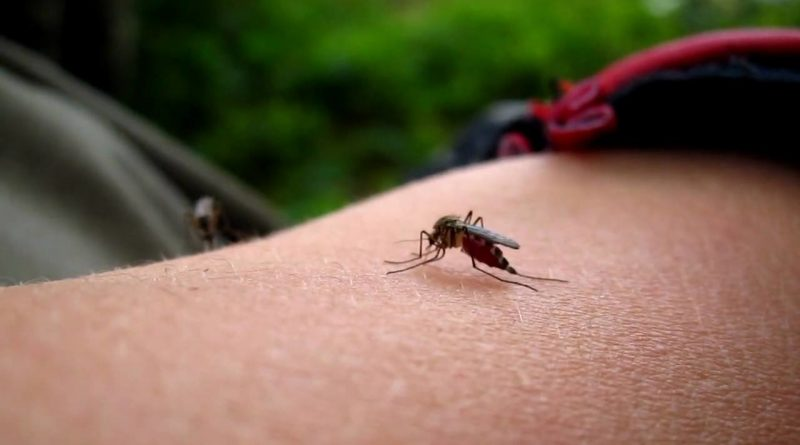 Почему комары в Таиланде могут быть опаснее крокодилов