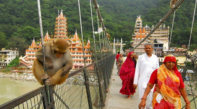Инструкция по выживанию в индийских путешествиях
