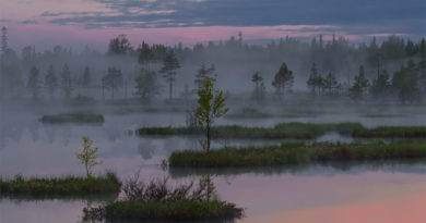 Ядовитый туман вКарелии истребляет птиц