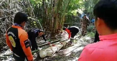 В Таиланде шершни до смерти закусали гида на глазах у перепуганных туристов